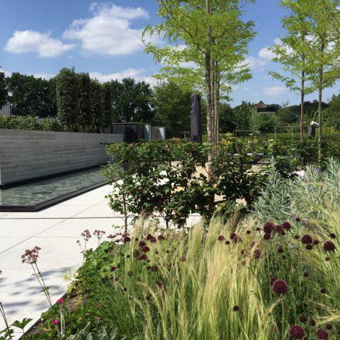 Sleek modern garden