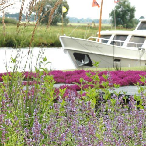 Natural garden in Soest