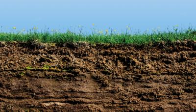 Web p20 soil istock 174337663 editv2