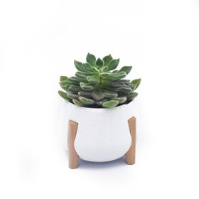 3D Printed with Beech Stand White Planter with Legs
