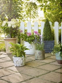 Press Loft Image Of Dobbies Living Wall Planters For Press Pr