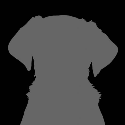 Terrier - other Image
