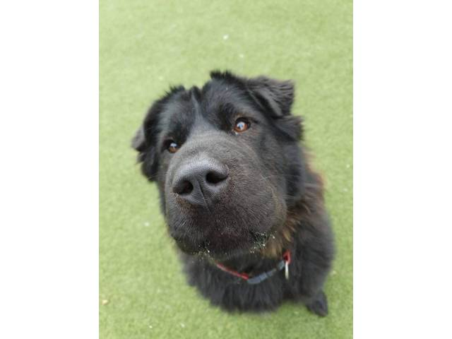 Other / Mixed Breed Image
