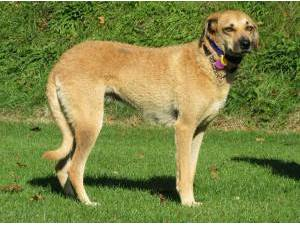 Other Mixed Breed Rescue Dogs Puppies In Brighton Petlist