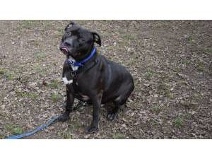 cd3622fa5b79 Other   Mixed Breed Rescue Dogs in Kent