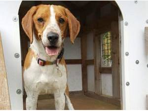 Navigation - Beagle