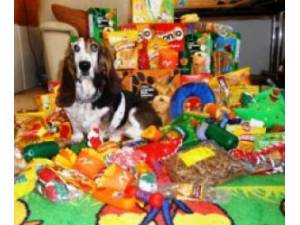 Dogs Toys Needed Urgently - None Photo