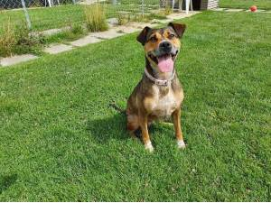 Cookie - Female Mixed Breed Photo
