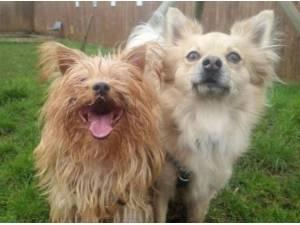 Navigation - Terrier  crossbreed Photo