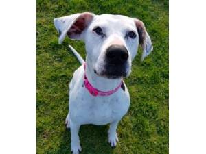 Buttons - Female Crossbreed Photo