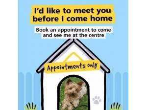 Zacky - Male Terrier: Yorkshire Photo