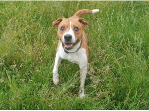 Navigation - Jack Russell Terrier
