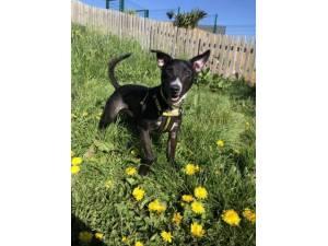Peppy - Male Terrier Cross Photo