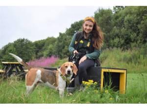 Copper - Male Beagle Photo