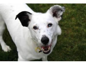 Casper - Male Terrier Cross Photo