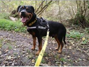SMOKEY - Rottweiler Photo