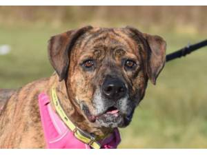 Lexi - Female A Crossbreed Photo
