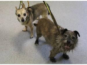 Baxter - Male Terrier Cross Photo