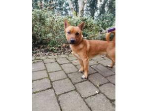 Singe - Male Terrier Cross Photo