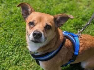 Billy - Male Terrier Cross Photo