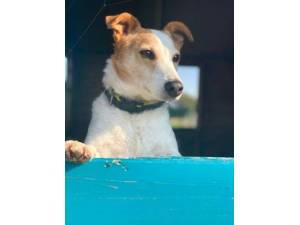 Cheeky - Male Terrier Cross Photo