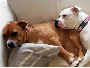 ROSIE - Yorkshire Terrier  crossbreed Photo