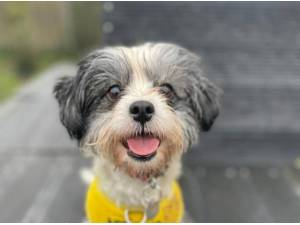 TINKA - Terrier Photo