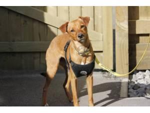Lula - Female Jack Russell Terrier (JRT) Photo