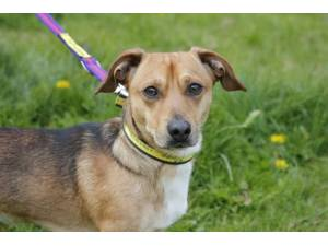 Bruce - Male Jack Russell Terrier (JRT) Photo