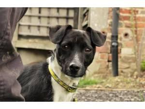 Marley - Male Terrier Cross Photo