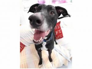 RAGNOR - Greyhound  crossbreed Photo