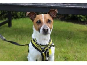 Declan - Male Terrier Cross Photo