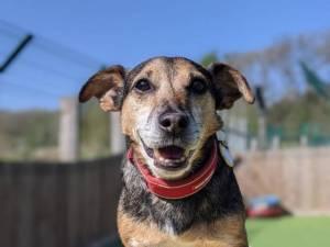 Mack - Male Jack Russell Terrier (JRT) Photo