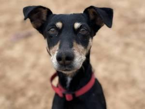 Sally - Female Terrier Cross Photo
