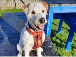 BUDDY - Terrier Photo
