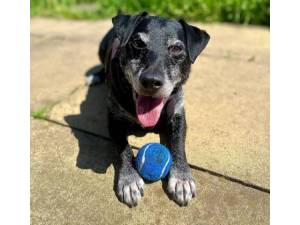 Bruce - Male Terrier (Patterdale) Photo