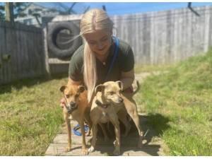 Dido - Female Terrier Cross Photo
