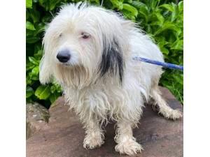 Little Bea - Female Terrier Cross Photo