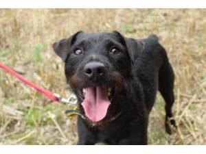 Griff - Male Terrier Cross Photo