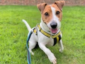 Loki - Male Terrier Cross Photo