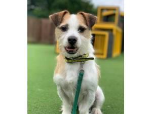 Freddie - Male Terrier Cross Photo