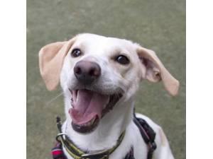 Mattie - Male Terrier Cross Photo