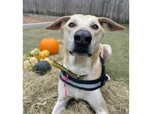 Dobby - Male A Crossbreed Photo