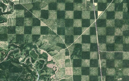 Checkerboard Forest