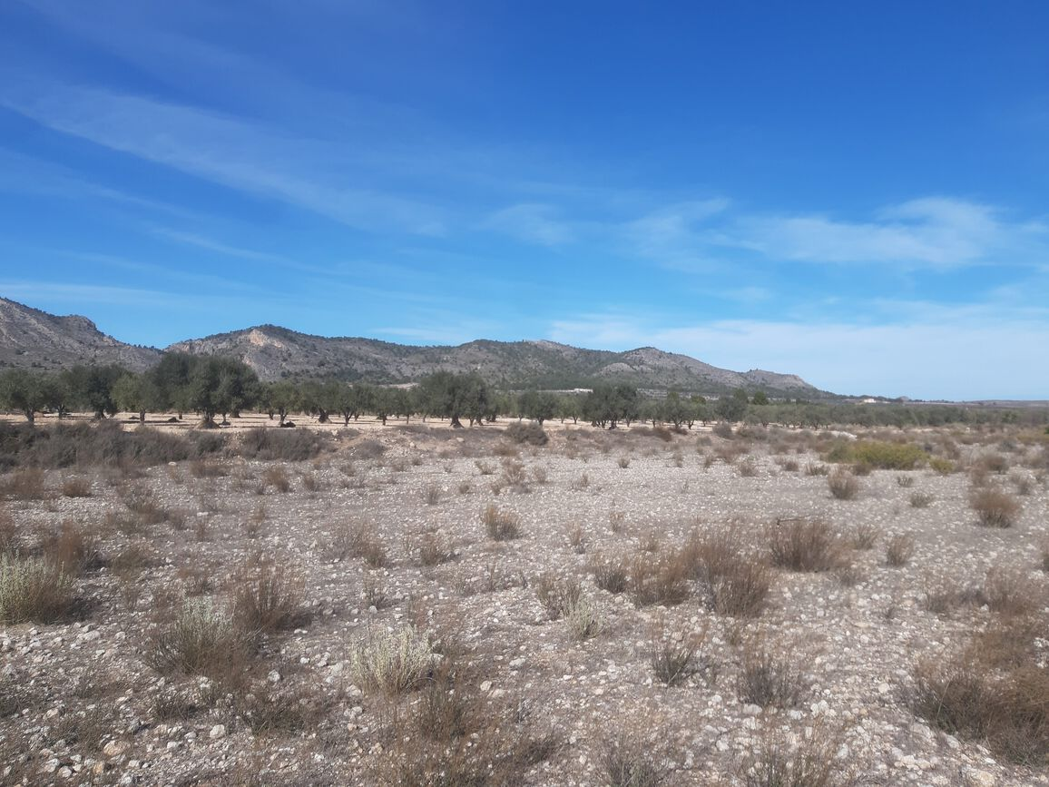 TFSLP04.136: Land for sale in Salinas