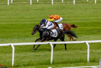 <p>THE KING'S HORSES (GB) - 3rd Gr.3 Premio Primi Passi at San Siro</p>