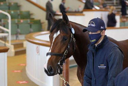 <p>33 FRANKEL ex ARIS | Bay Colt | Purchased at Tattersalls October Yearling Sale Book 1 2020 for 360,000gns by Roger Varian</p>