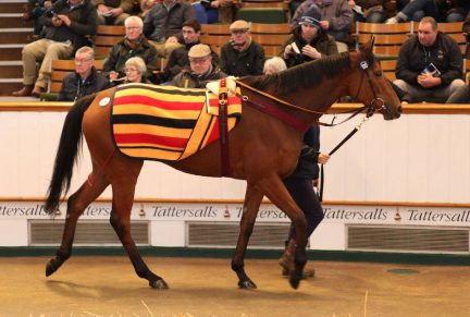 <p>120 I'LL HAVE ANOTHER | Purchased at Tattersalls February Sale for 200,000gns by Cormac McCormack</p>