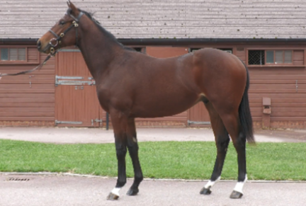 <p>547 INVINCIBLE SPIRIT ex AARAAMM | Bay Colt | Purchased at Tattersalls October Yearling Sale Book 2 2020 for 100,000gns by Richard Frisby Bloodstock</p>