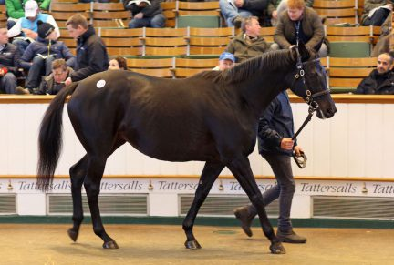 <p>1759 EBLOUISSANTE | Purchased at Tattersalls December Mare/Breeding Stock Sale 2016 for 1,100,000gns by Summer Wind Farm</p>